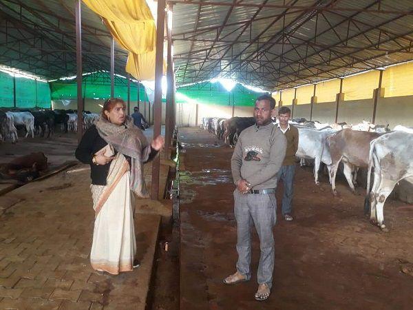 -कानपुर के अंतर्गत अकबरपुर नगर पंचायत की अध्यक्ष श्रीमती ज्योतिष्ना कटियार ने गौशाला का औचक निरीक्षण