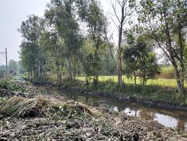 Clean Kali, Green Kali : Revival of the East Kali River origin is continuing rapidly