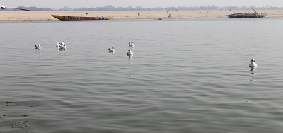 """गंगा नदी और गीता - गंगा कहती है – """"अविचलित-भाव"""", बिना जाने हो नहीं सकता : अध्याय 8 श्लोक 8  (गीता : 8:8)"""