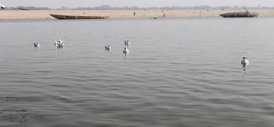 गंगा नदी और गीता - गंगा कहती है – मेरे अन्तरंग शक्ति-प्रवाह की तकनीक को समझो : अध्याय 14, श्लोक 17 (गीता:17)