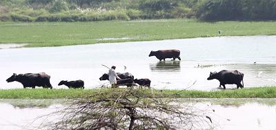 गंगा नदी - गंगा की समस्याएं, STP का बालू-क्षेत्र में नहीं होना (भाग 4)