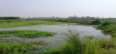गंगा नदी – STP का बालूक्षेत्र में न होना गंगा के लिए भीषण समस्याएं उत्पन्न करता हैं : (भाग -5)
