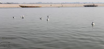 """गंगा नदी और गीता - गंगा कहती है – अनंत जीवों का """"जन्म-पालन-पोषण"""" करने वाली हूँ: अध्याय 8 श्लोक 18 (गीता: 8: 18)"""