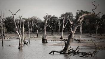 कोसी नदी अपडेट - बिहार बाढ़, सुखाड़ और अकाल, श्री शिवेन्द्र शरण से हुई बातचीत के अंश