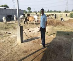 अलीगढ़ में गोशालाओं पर 3.98 करोड़ का कर्ज, चारे-भूसे तक को तरस रहे गोवंश