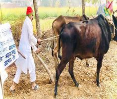 खेत में हल चलाकर सपाइयों ने किया किसानों का समर्थन